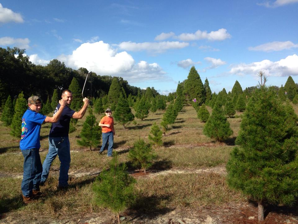 Learn More - Home Santa's Christmas Tree Forest